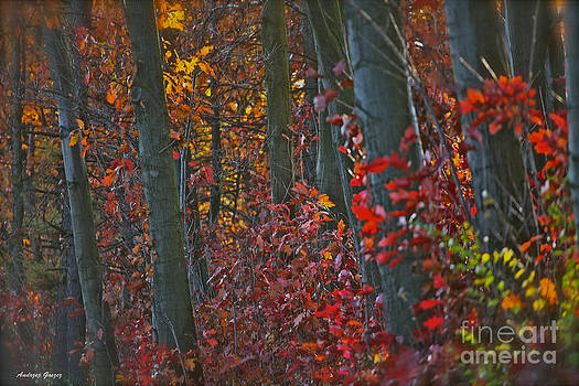 So fall in love with autumn. by  Andrzej Goszcz
