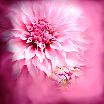 So Pink  by Sally Bauer