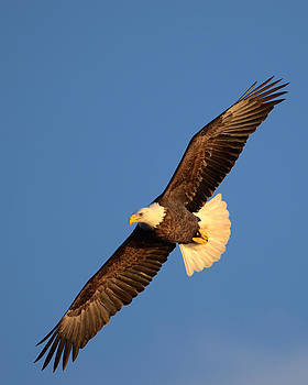Soaring Above by Paul Cimino