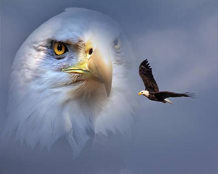 Mary Almond - Soaring Eagle