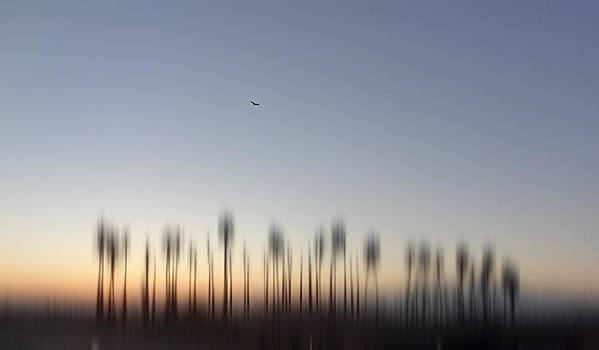 Soaring by Eileen Shahbazian