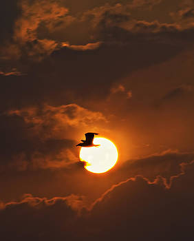 Soaring in the sun by Tony Reddington