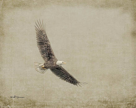 Soaring by Jeff Swanson