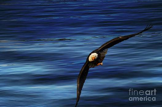 Soaring Over Water by Gail Bridger