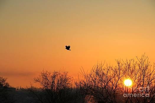 Soaring Sunrise 1 by Jay Nodianos