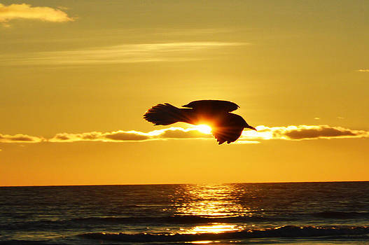 Soaring With Confidence by Sherry Allen