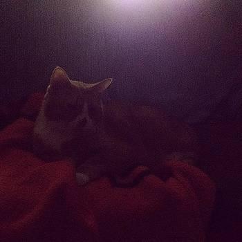 Socks Is Sleepy #cats #cute #pets by Kelli Donnelly