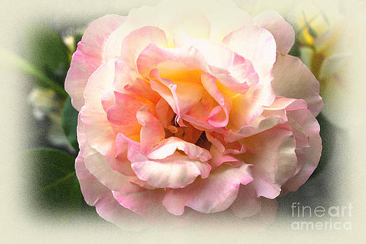 Soft And Delicate by Judy Palkimas