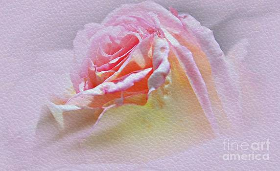 Soft And Delicate Petals by Judy Palkimas