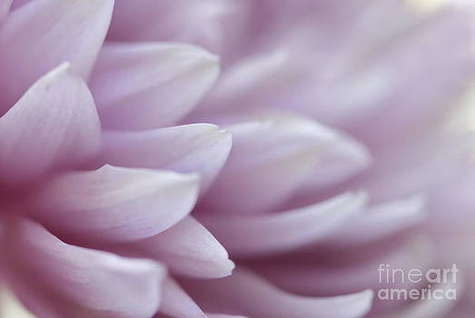 Soft and Flowing by Andrea Kollo
