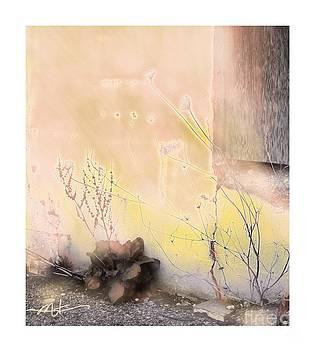 Soft And Natural by Bob Salo