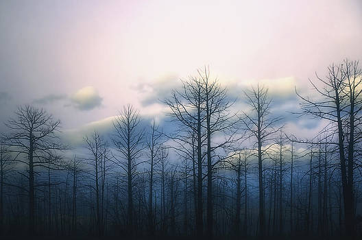 Soft Clouds and Dead Wood by Rich Beer