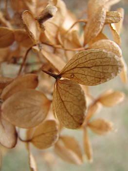 Sandy Tolman - Soft Dry Petals 3026