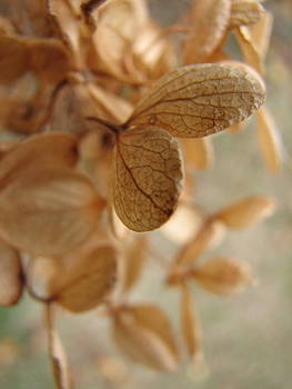 Sandy Tolman - Soft Dry Petals 3029