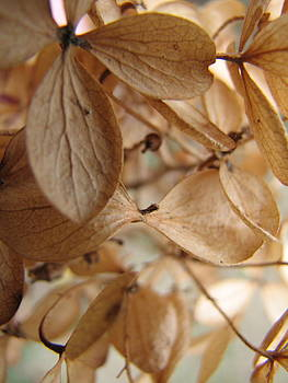 Sandy Tolman - Soft Dry Petals 3032