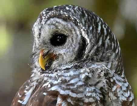 Patricia Twardzik - Soft Feathered Friend