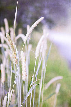 Soft grass by Peter Chadwick