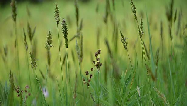 Minartesia - Soft Green