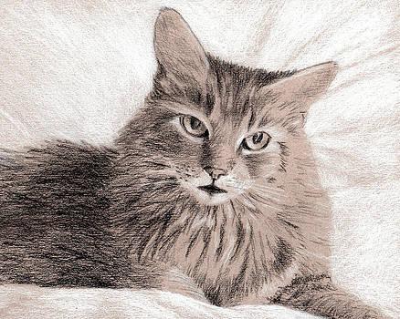 Soft Kitty by Beth Johnston