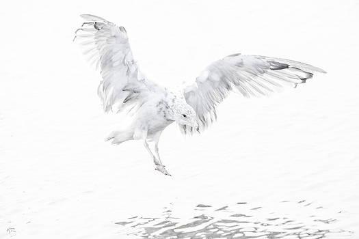 Karol Livote - Soft Landing