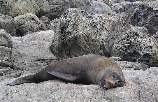 Dreamland Media - Soft Life Seal