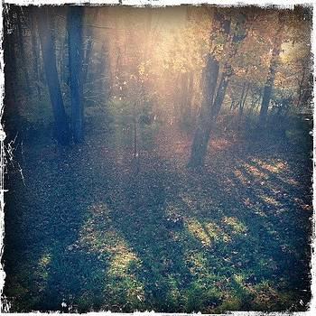 Soft Light Thru Morning Mist by Paul Cutright