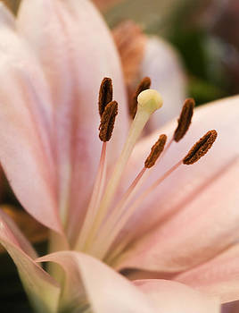 Marilyn Hunt - Soft Lily