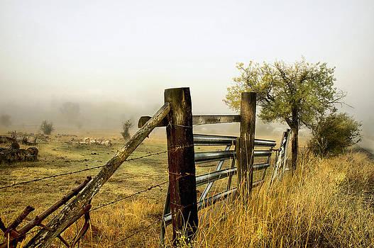 Soft Meadow Morning by Doug Fredericks