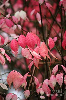 Danielle Groenen - Soft Pink Autumn Leaves