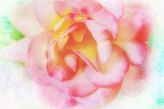 Soft Pink by Joan Bertucci