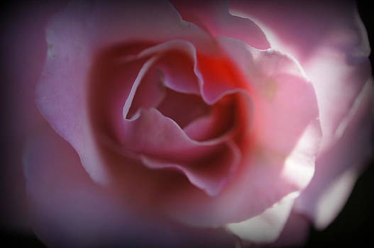 Laurie Perry - Soft Pink Petals
