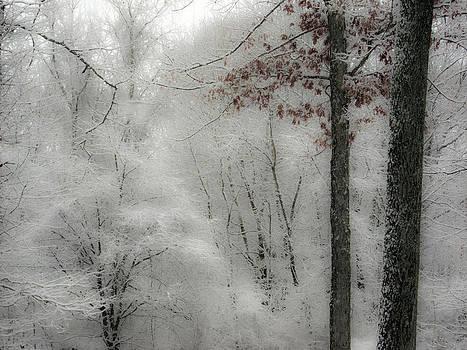 Soft Snow by Nancy De Flon