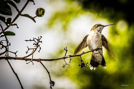 Hummingbird - Soft Touchdown by Barry Jones