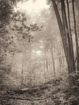 Softly comes the morning-Silvercreek woods by Alan Norsworthy