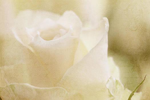 Softly Now by Margaret Hormann Bfa