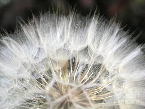 Softness of the World by Ausra Huntington nee Paulauskaite