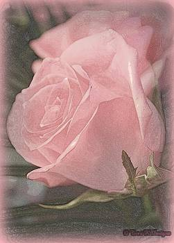 Softness by Terri K Designs