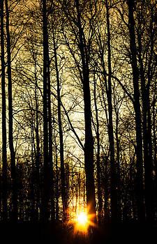 Solar by Matti Ollikainen