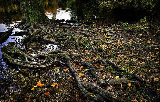Solid roots by Henrik Petersen