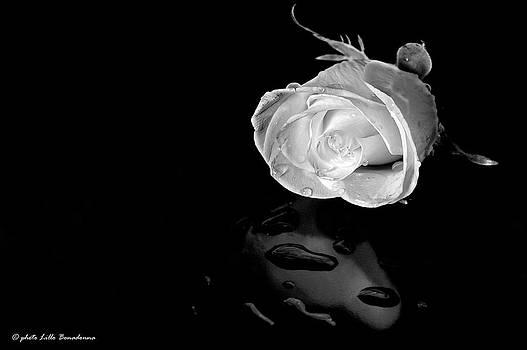 Solitary by Lillo Bonadonna