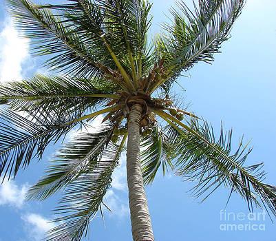 Solitary Palm by Leara Nicole Morris-Clark