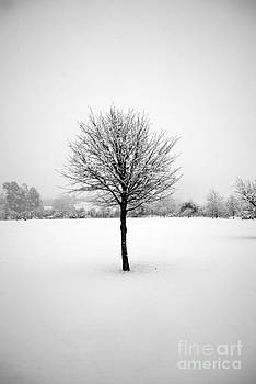 Rachael Shaw - Solitary Snow Tree - in Black and White