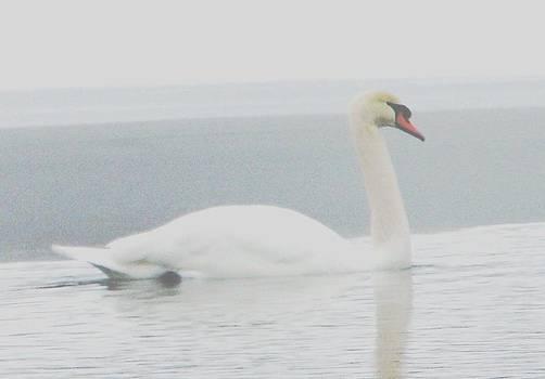 Angela Davies - Solitary Swan