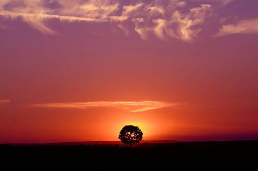 Solitary tree by John Dickinson