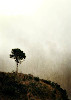 Michelle Calkins - Solitary Tree