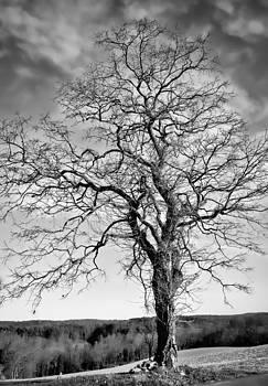 Solitude by Wayne King