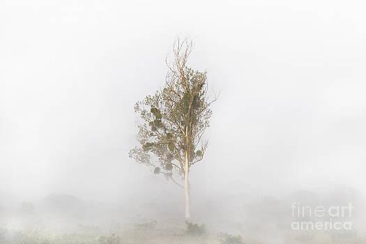 Solitude by Bernadett Pusztai