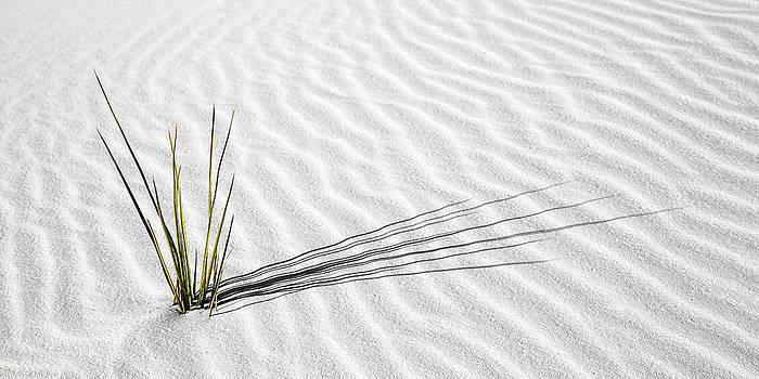 Solitude by Brad Brizek