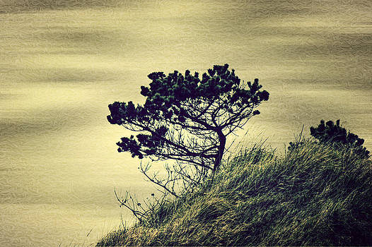 Solitude by Melanie Lankford Photography