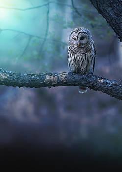 Solitude by Rob Blair
